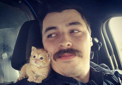 """Il poliziotto trova una gattina, la foto fa impazzire il web: """"Questo è il mio nuovo partner"""""""