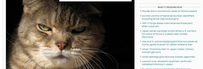 Anziana trovata in una pozza di sangue, indagato... un gatto per tentato omicidio